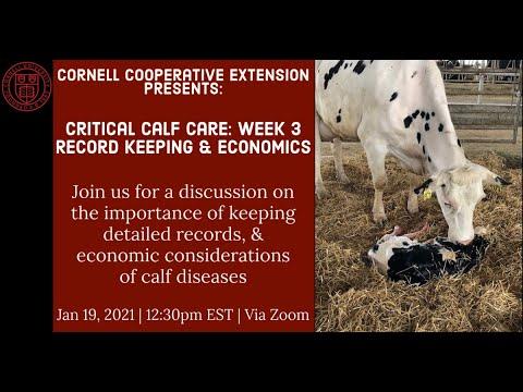 Critical Calf Care Week 3: Record Keeping & Economics