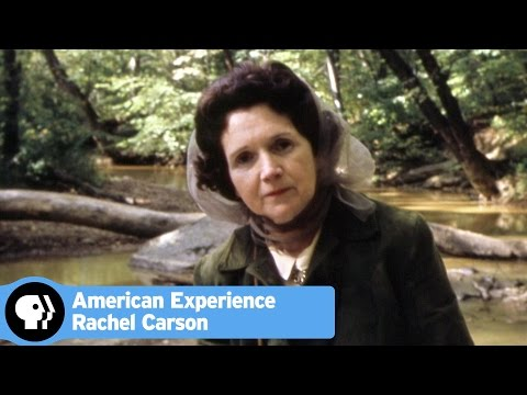 rachel carson essay Check out our top free essays on the obligation to endure rachel carson to help you write your own essay.