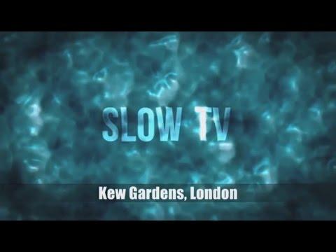 Slow TV - Kew Gardens, London