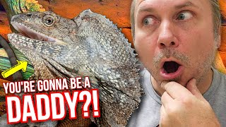 OMG! IS MY FRILLED DRAGON GONNA BE A DADDY??!! | BRIAN BARCZYK by Brian Barczyk