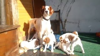 Benita in the Dog House, it´s a dogs life!