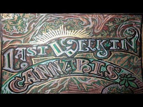 Last Week In Cannabis News Show 6/12/17