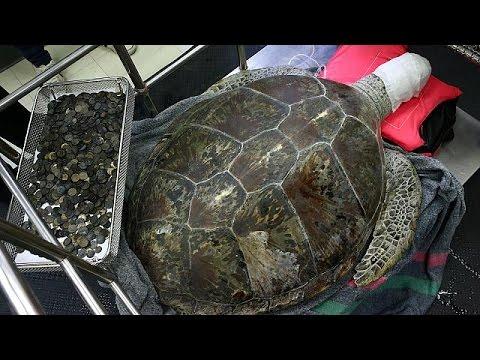 Πέθανε η χελώνα κουμπαράς που είχε καταπιεί 915 νομίσματα