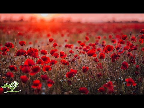 Beautiful Piano Music: Relaxing Music, Romantic Music, Sleep Music, Study Music ★132