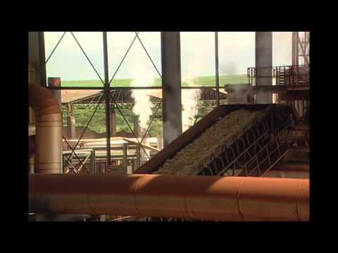 A revolução da biomassa