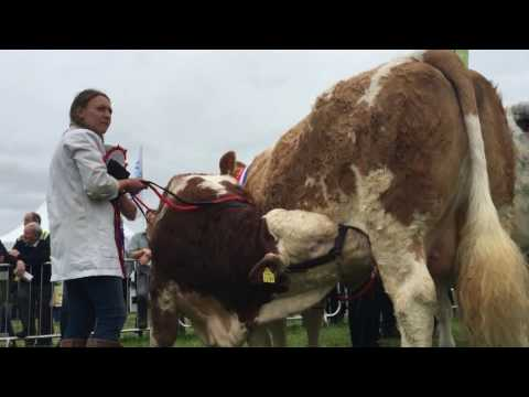 Tullamore show parade of champions