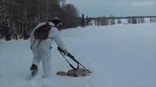 Rimbey (AB) Canada  City new picture : Coyote Hunt, Rimbey Alberta