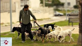 Walking a pack of 9 rescue dogs! by The Orphan Pet