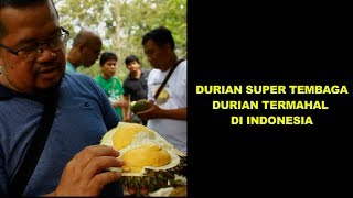 Video DURIAN SUPER TEMBAGA, DURIAN TERMAHAL DI INDONESIA MP3, 3GP, MP4, WEBM, AVI, FLV April 2019