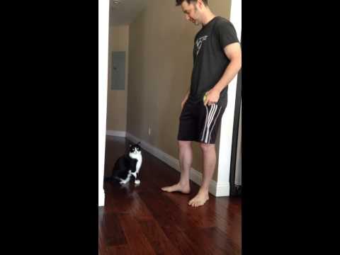 gatto chiede abbraccio al proprio padrone! un video incredibile!