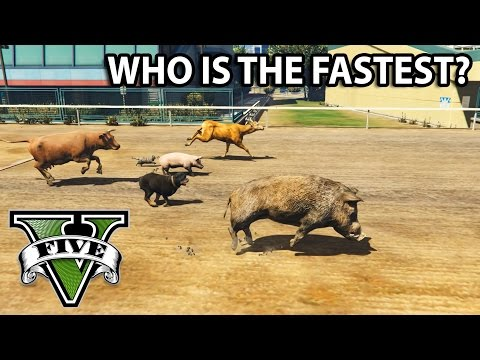 GTA V - Who is the fastest animal? [All animals race]