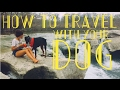 foto NOMAD TIPS! - Top 5 Hacks to Traveling With a Dog Borwap