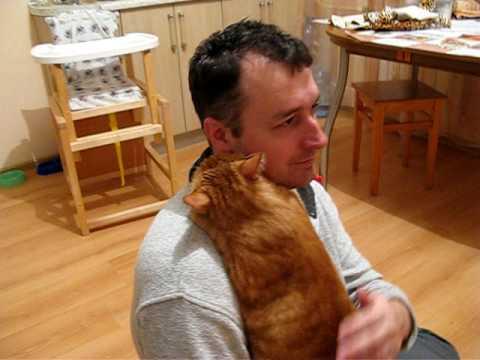 超可愛喜歡抱抱的貓咪,療癒指數破表!!