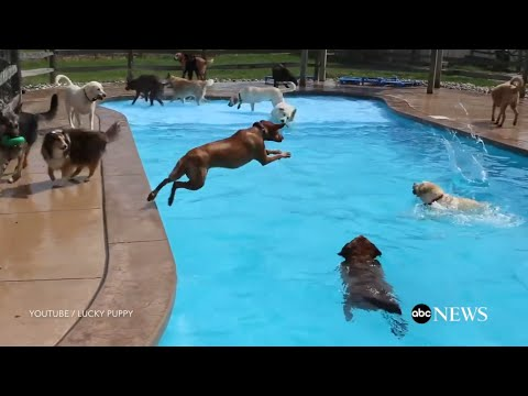 Puppy Pool Party Will Make You Smile
