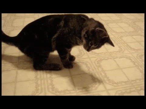 「[ネコ]自分の影に猫パンチを繰り返す姿がカワイイ猫。」のイメージ