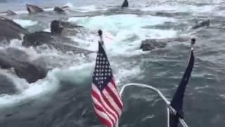 Ils rencontrent un groupe de baleines à bosse en Alaska