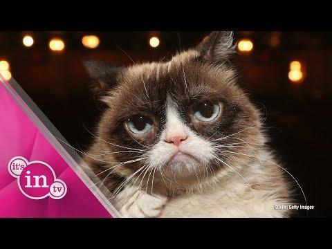Grumpy Cat ist tot: Social Media trauert um berühmte  ...