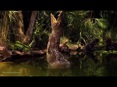 Amazing Animals Hidden Deep in the Jungle - Nature Documentary 2017