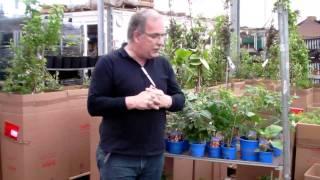 #351 Balkonanbau von Gemüse