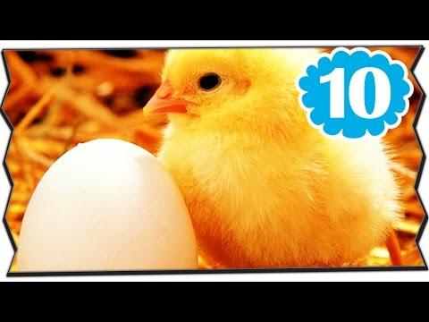 10 สิ่งที่คุณไม่รู้เกี่ยวกับ ไก่