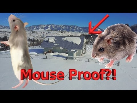 Mouse Proofing Jerry's Cabin - VICTORY!!! (видео)
