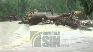 Árboles y poste del tendido eléctrico afectan comunidad de Anamuya, en La Altagracia
