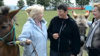 VIDEO DNE: Oslíci z Belgie zaklepali na dveře reportéra NatočVidea