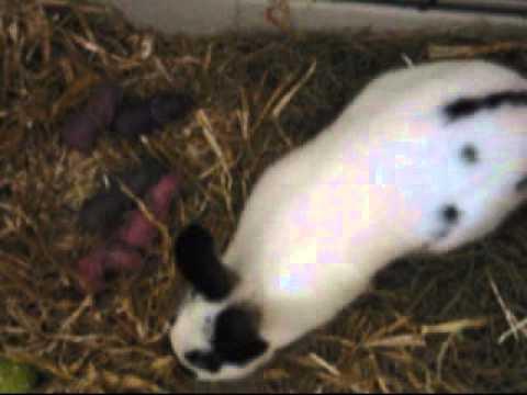 mijn konijnen 3