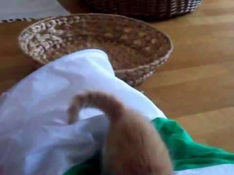 dei micetti giocano nel tunnel ma mamma gatto supervisiona!