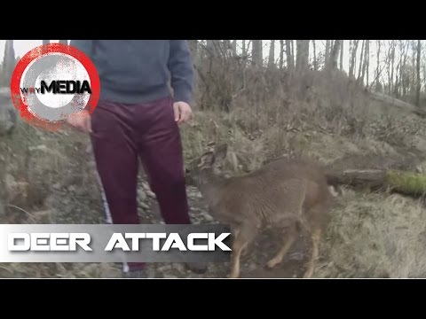 Deer Attack on Fisherman
