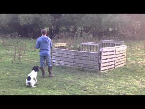 - Fallowfen Training Kennels