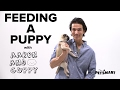 PetSmart Puppy Training: Feeding a Puppy