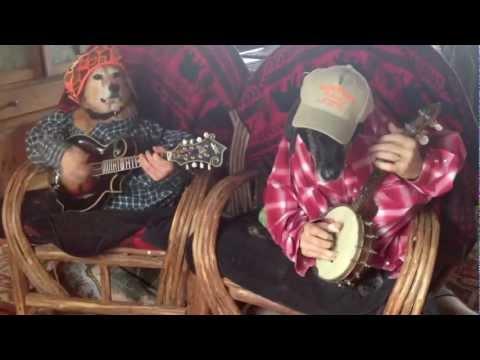 Psy grają na banjo
