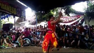 Video Keren....! Kudho Praneso_Bujang Ganong MP3, 3GP, MP4, WEBM, AVI, FLV Agustus 2018