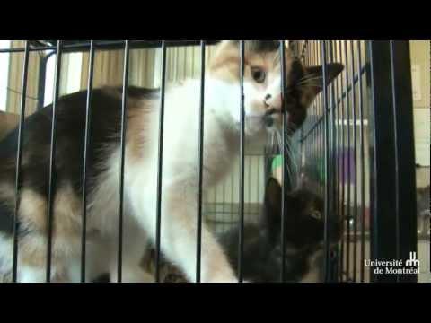 Eine zweite Chance für Hunde und Katzen