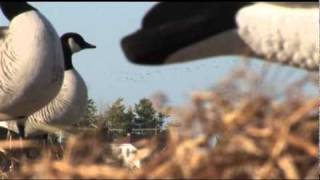 Zink Calls Band Hunters 2: The Breaking Point Quebec Goose Hunt