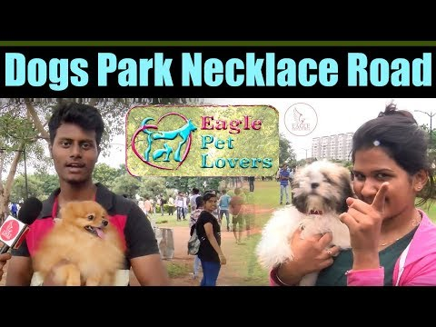 Dogs Park Necklace Road | Eagle Pet Lovers | Hyderabad | Eagle Media Works