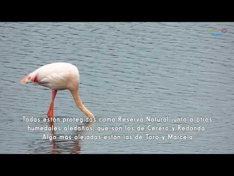 Birding Málaga. Ver aves en las lagunas de Campillos