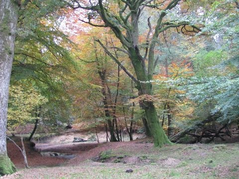 Acres Down to Bolderwood Deer Sanctuary round | the new forest  Walks
