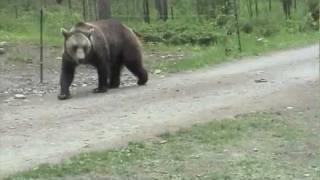 "Video ""The Day We Met Bears"" Glacier National Park,  Montana,  June 2004 MP3, 3GP, MP4, WEBM, AVI, FLV Juni 2017"