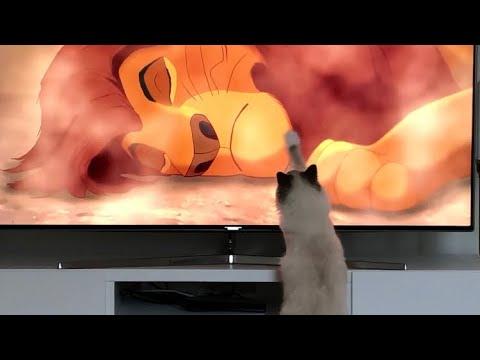 Wow dieren worden ook steeds slimmer kat kijkt film