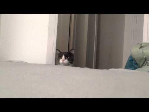 il-gatto-e-il-gioco-del-cucu-322