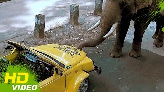 Netru Indru - Manochitra's elephant scared