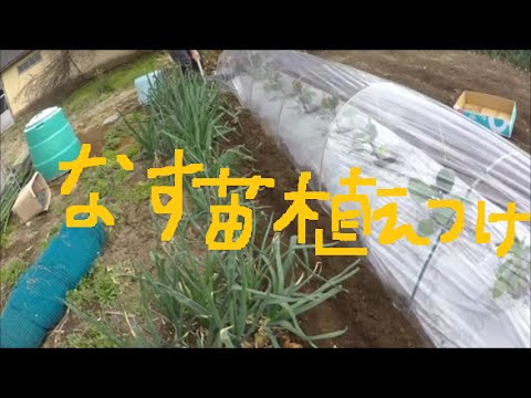 2016年春 なす苗をマルチとトンネルで植え付け 家庭菜園