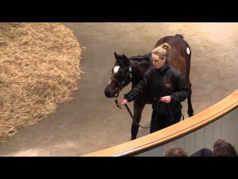 Tattersalls December Foal Sale 2015 Day 3 Video Review