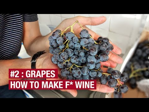 2. Bought 10Kg Of Grapes. Now What ? How To Make F* Wine At Home Ep2