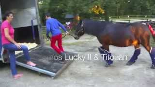 Video Lamotte Beuvron 2014 - Semaine poney Partie 1 MP3, 3GP, MP4, WEBM, AVI, FLV Mei 2017