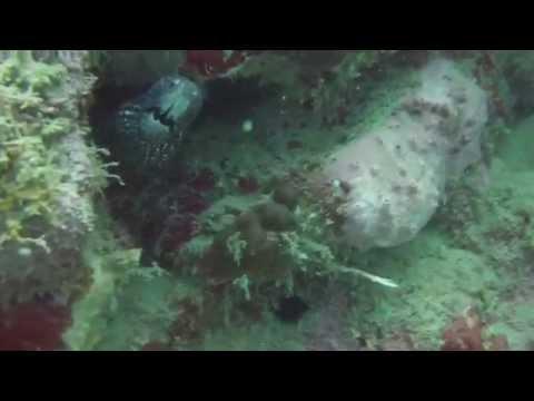 Buceo en Isla Grande y Portobelo