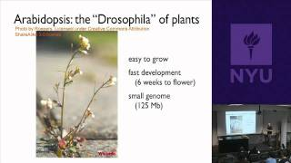 Natural Science II: Genomes And Diversity - Plant Genes And Genomes&Breeding