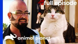 Cat and Dog at War Learn To Get Along | My Cat From Hell (Full Episode) by Animal Planet